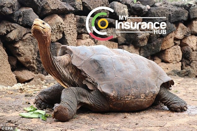Image of Diaego the 100 year old turtle